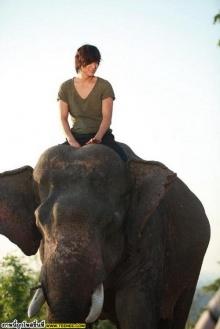 กรี๊ดดลีมินโฮ ขี่ช้างน่ารักเวอร์!