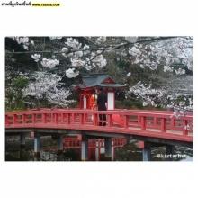 ภาพแรกสั่งตรงจากญี่ปุ่นของกองรอยฝันตะวันเดือด