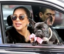 นางแบบดังคิดหนัก! ถูกน้องหมาของ เลดี้ กาก้า สอยงานพรีเซนเตอร์กระเป๋าแบรนด์หรู!
