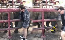 แหย่แรงไปหน่อย!! วินาที 'มดดำ-คชาภา' โดนช้างถีบกระเด็นจนร้องลั่น ก่อนช้างวิ่งหนี?! (คลิป)