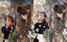 """จะเป็นยังไง? เมื่อ """"น้องเป่าเปา"""" เจอกับโคอาลา ที่สวนสัตว์ออสเตรเลีย"""