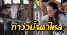 'อั้ม พัชราภา' ทำวัวน้ำตาไหล!! ลุยถึงที่ ช่วยไถ่ชีวิตโค-กระบือ 24 ตัว (คลิป)