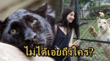 เปิดคำพูดเด็ด!! มิ้นต์ เผยถึงจำนวนเสือดำในป่าไทย ไม่อยากพูดถึงใคร อย่าเขาต้องตายฟรี!