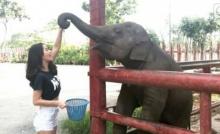 โม อมีนา ซวย!! เจองวงช้างฟาดหน้าทิ่ม